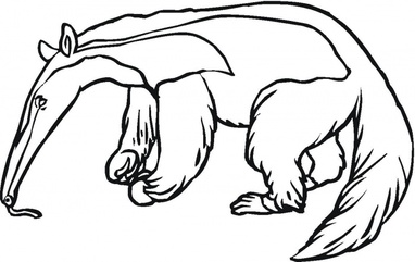 anteater coloring pages - photo#18